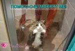 Да изкъпеш котка ...
