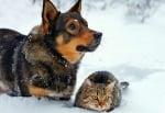 Хипотермия на куче или котка