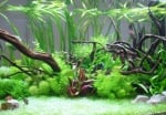 Холандски аквариум