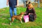 Храна, разходка, лакомства и внимание получиха кучетата от старозагорския приют