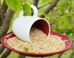 Хранилка за птици от чашка и чинийка