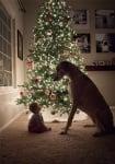 Хрътка с малко бебе до елха