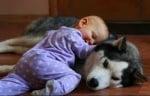 Хъски с бебе