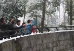 Хвърляне на снежни топки по животни