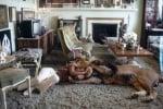Игра на пода с Мелани Грифит и лъва Нил