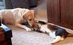 Игра с животните