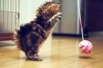 Игра с котето