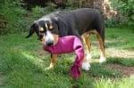 Играчка за куче от бутилка и чорап