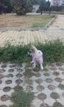Белла на разходка...