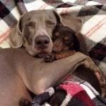 Индиана и Харлоу спят прегърнати
