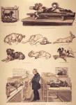 Развитие на физиологията до XIX век
