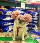 Избор на кучешка храна