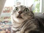 Изненадана котка