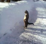 Изправена котка