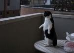 Изправена върху маса котка