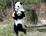 Изследователи с костюм на панда