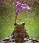 Жаба се предпазв аот дъжда