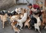 Жена храни бездомни кучета