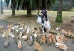 Жена храни зайци в парка
