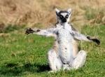 Животни, хванати в интересни и необичайни пози