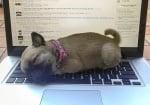 Животни, които се опитват да ни кажат, че работата не е на първо място