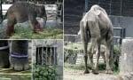 Животни в зоопарк в Индонезия