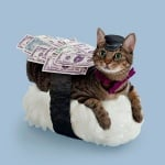 Кафява котка с пари и шапка върху суши