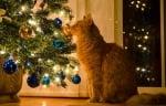 Как да държим котката далеч от коледното дърво?