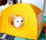 Как да направим къщичка за котки от тениска и закачалка?