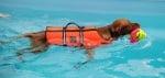 Как да науча кучето си да плува