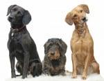 """Обучение на кучето: Урок №16. Научете кучето на командата """"НАЗАД"""""""