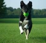 Как да предпазим кучето от затлъстяване