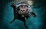 Как да предпазим кучето в басеийн