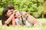 Как да социализираме кученце