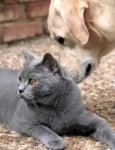 Как да запознаем куче и котка
