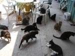 Как се гледат много котки
