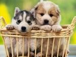 Как да обучим малко кученце?