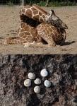 Как спят животните