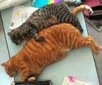 Както работили, така заспали ...