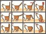 Какво ни казва опашката на котката?