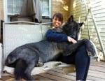 Канадски вълк