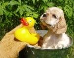 Къпане на кученце в градината