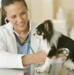 Клиника при Ендокардит при кучето