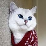 Коби с пуловер