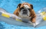 Кое куче не може да плува