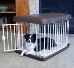 Кога се налага кучето да стои в клетка?