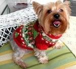 Кои кучета имат нужда от топли дрехи през зимата?
