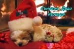 Коледен сън