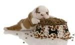Колко храна да давам на кучето