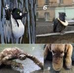 Колко невероятни са животните